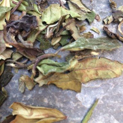 Pai Mu Tan (40gr) (Witte thee)